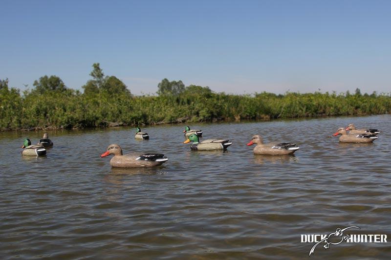 Forme colvert Duck Hunter