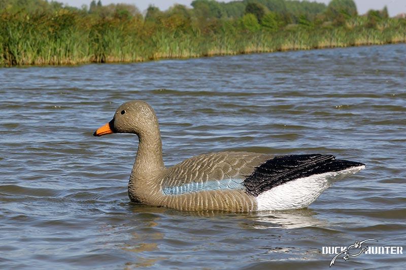 blette-oie-cendree-duck-hunter