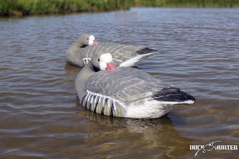 blette-oie-dormeuse-duck-hunter