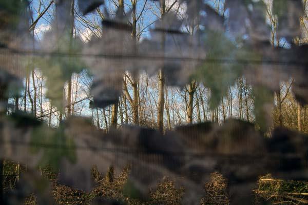 Filet camouflage Visunet Duck Hunter