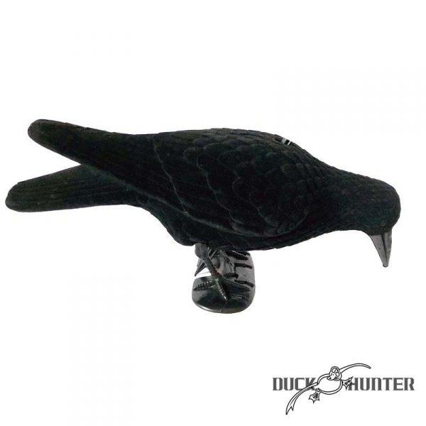 Forme de corbeau mangeur