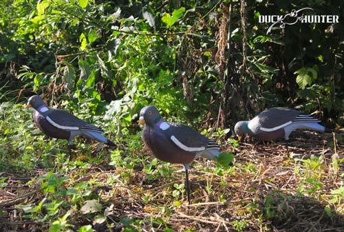 Forme pigeon HD UV Duck Hunter